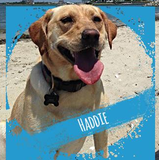haddie